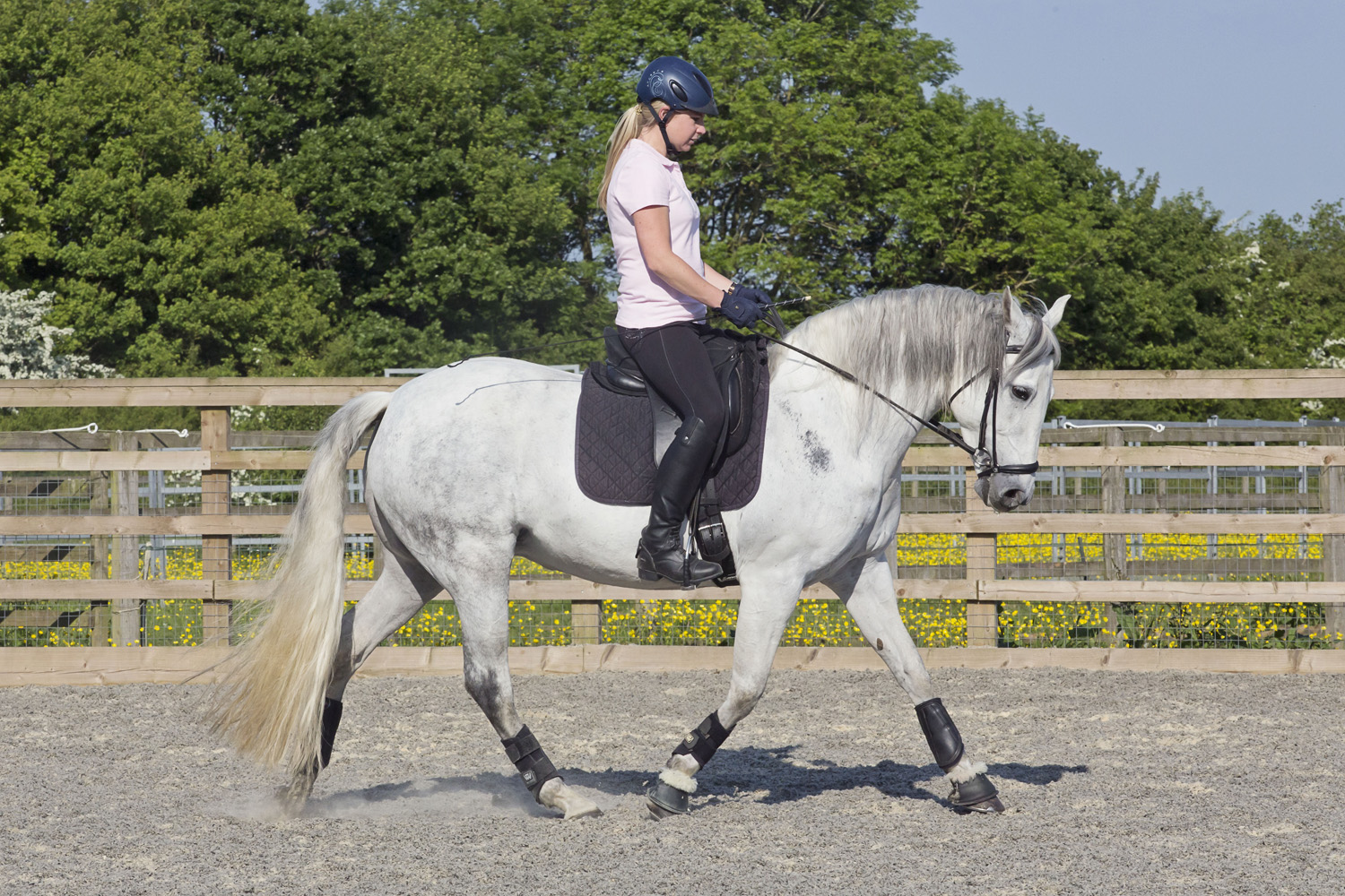 Lovely PRE all-rounder - Height: 15.1 hhBreed: PREColour: GreyDOB: 4/07/2008Gender: Mare (APTO)