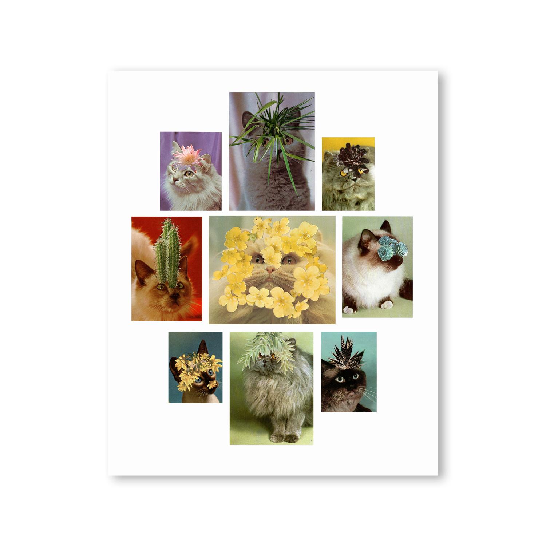 cats(III).jpg