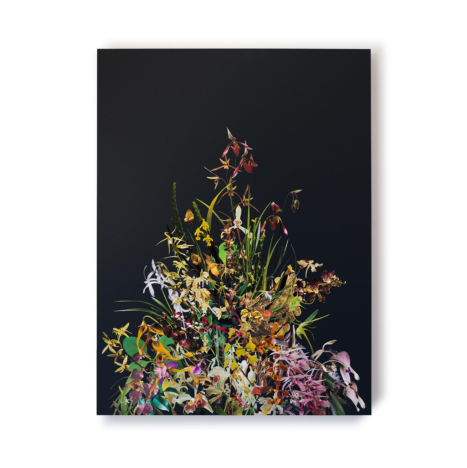StephenEichhorn-Orchids-18.jpg