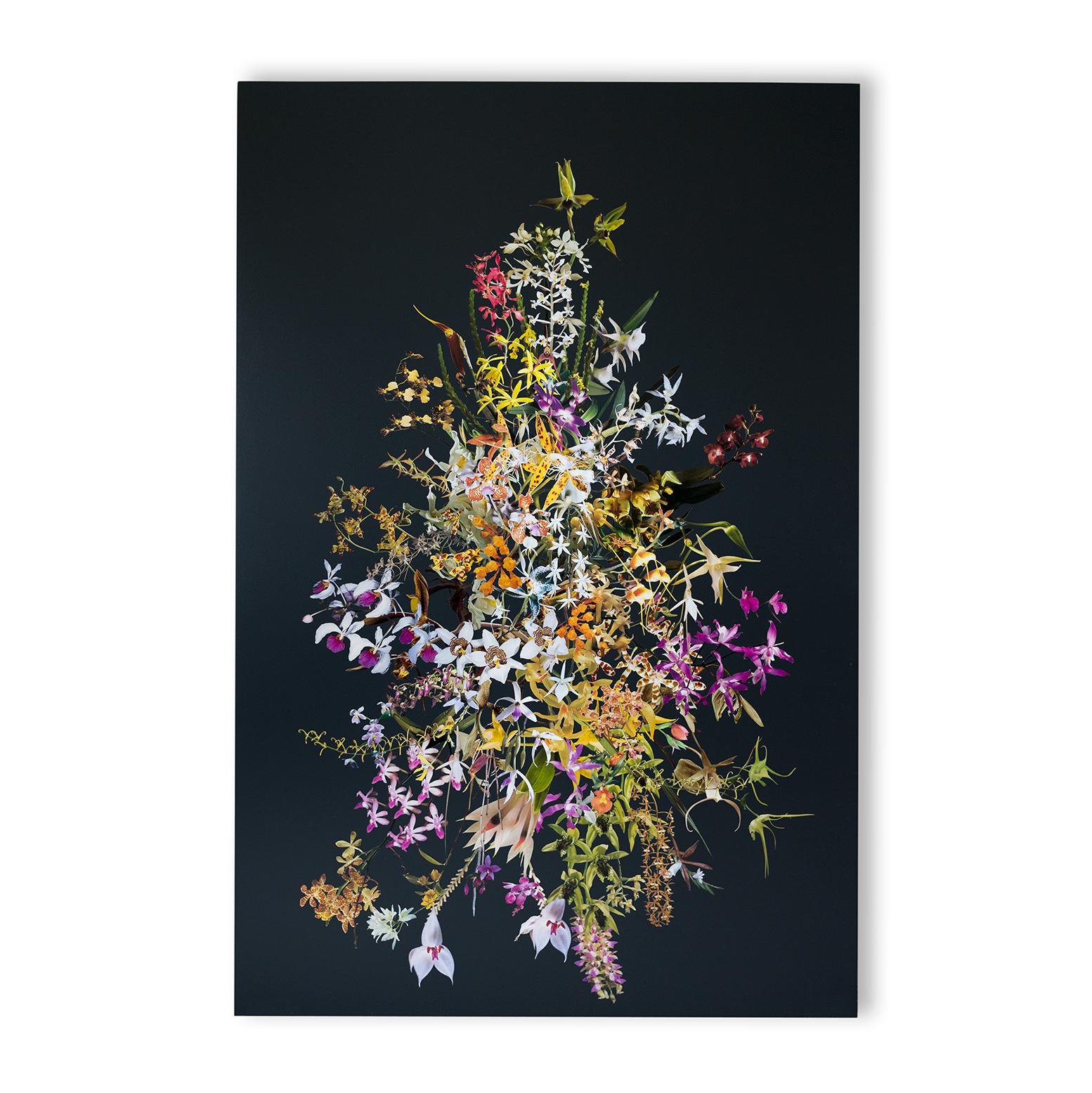 StephenEichhorn-Orchids-16.jpg