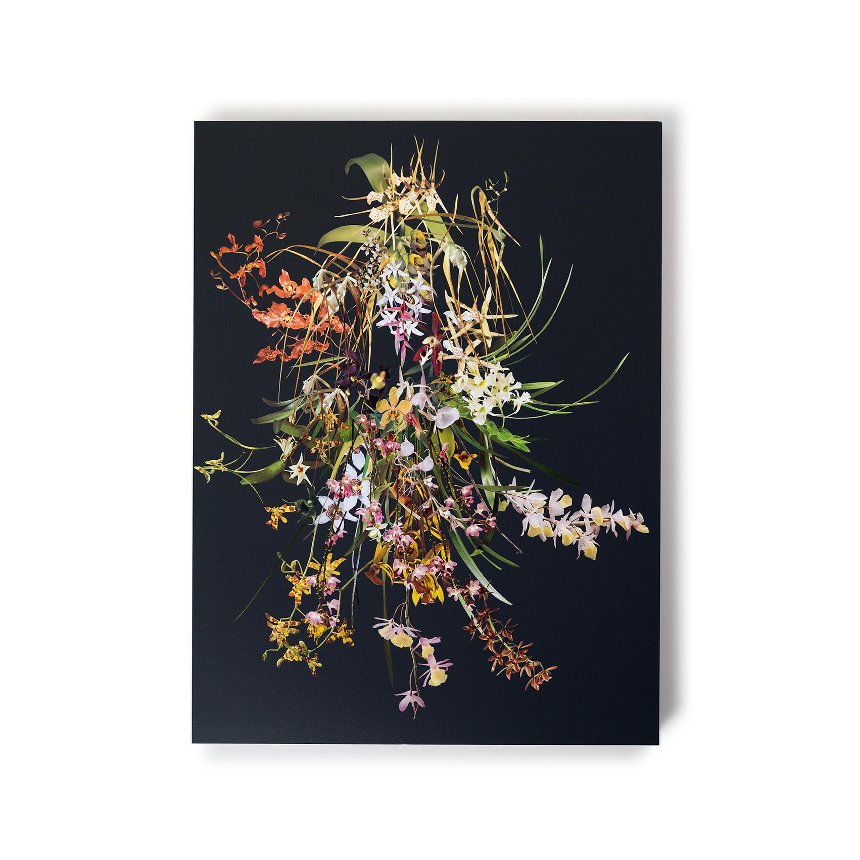 StephenEichhorn-Orchids-7.jpg