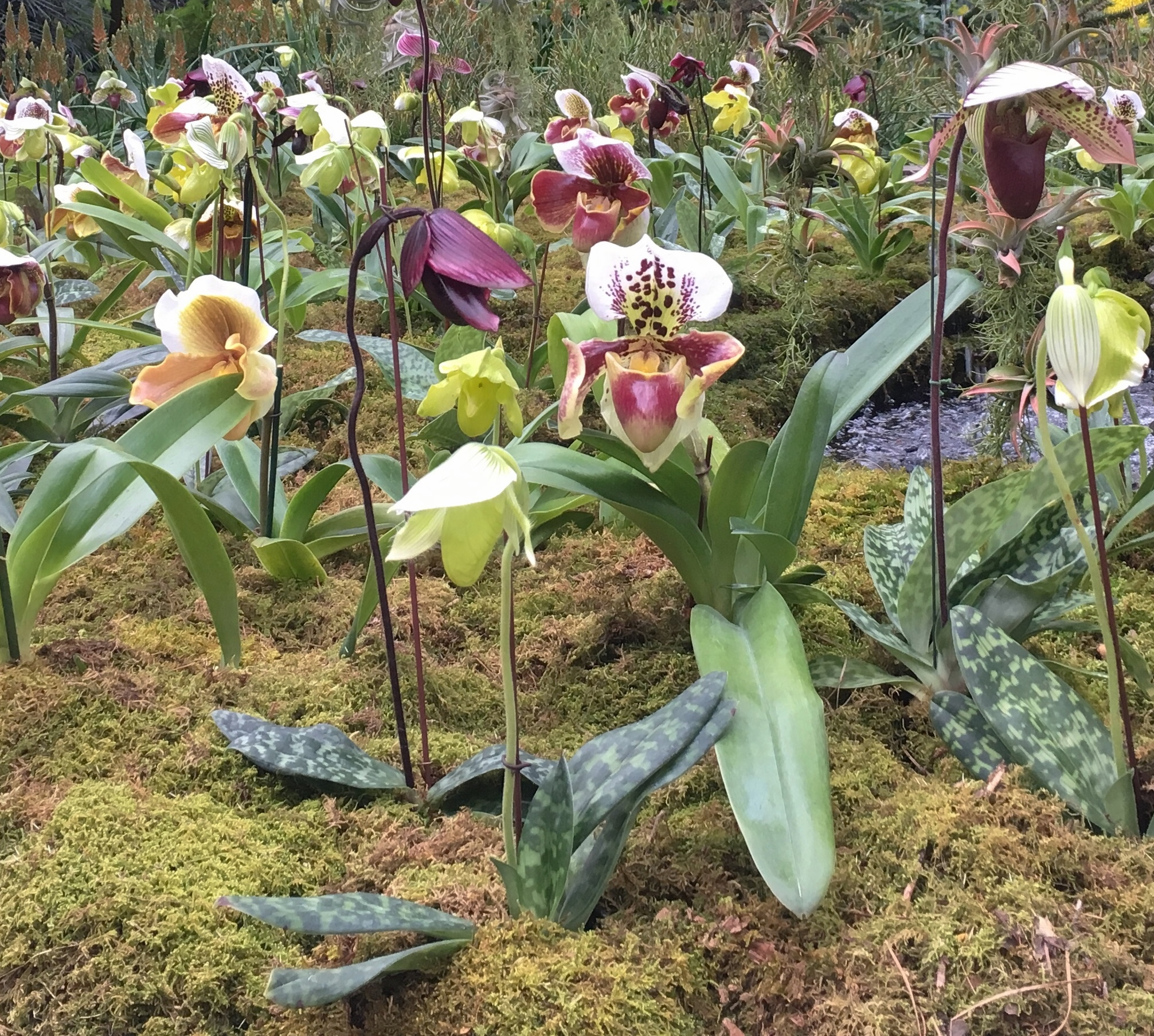 A field of orchids at Longwood Gardens
