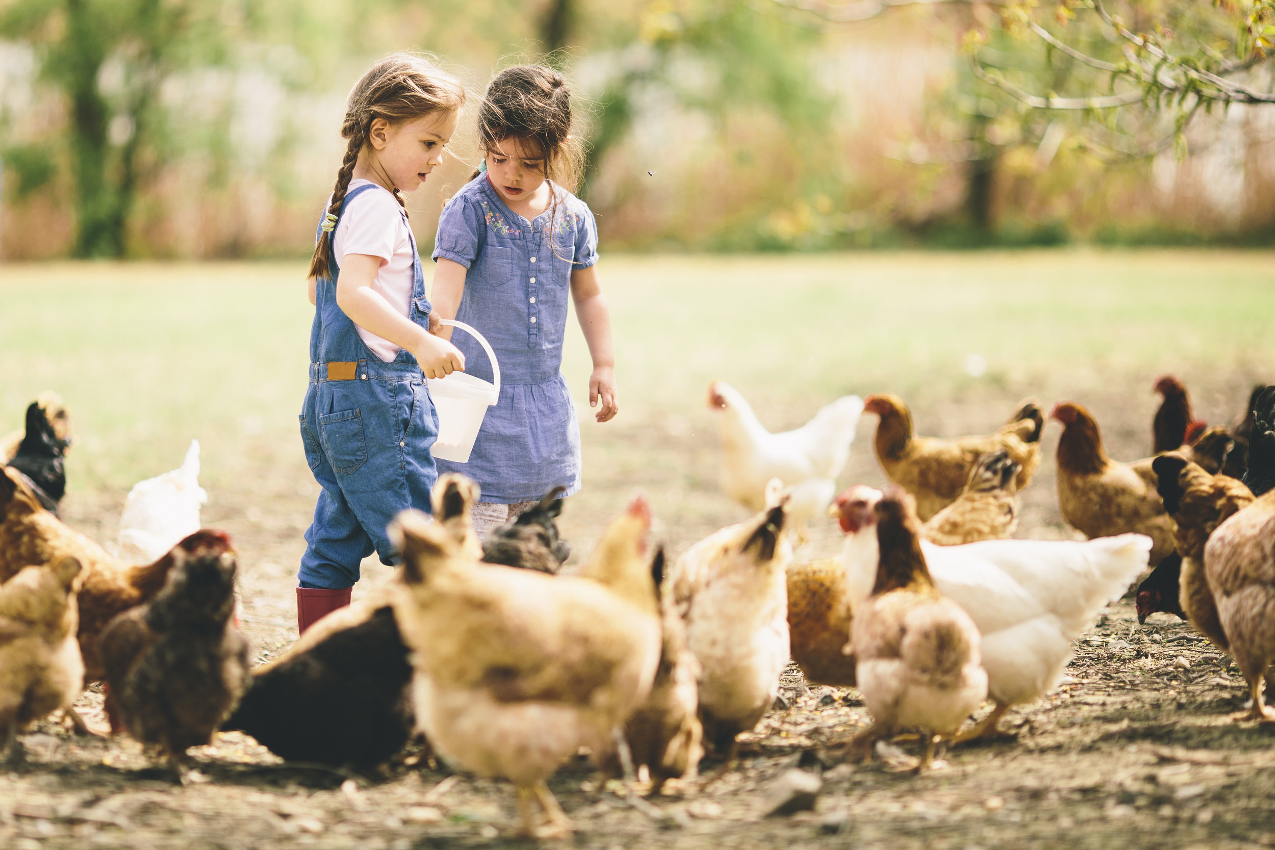Farm To Table #4: Poultry Roast - July 13th 20195 pm