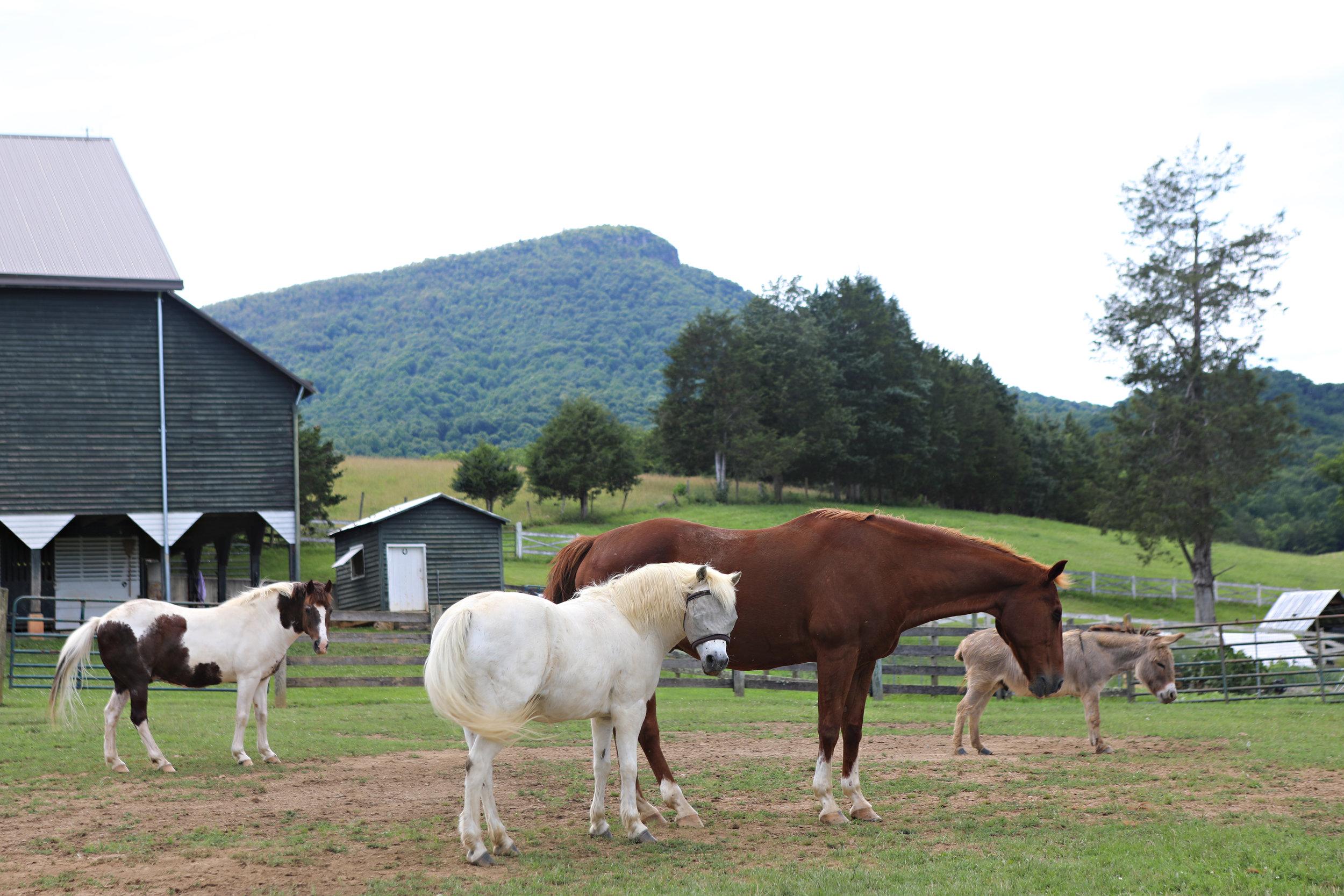 horses by the barn.jpg