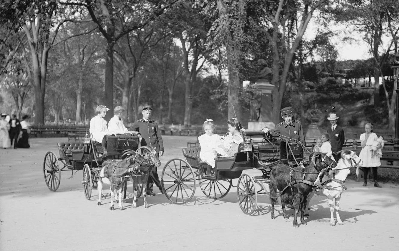 Goat-carriages-Central-Park-e1544722465340.jpg