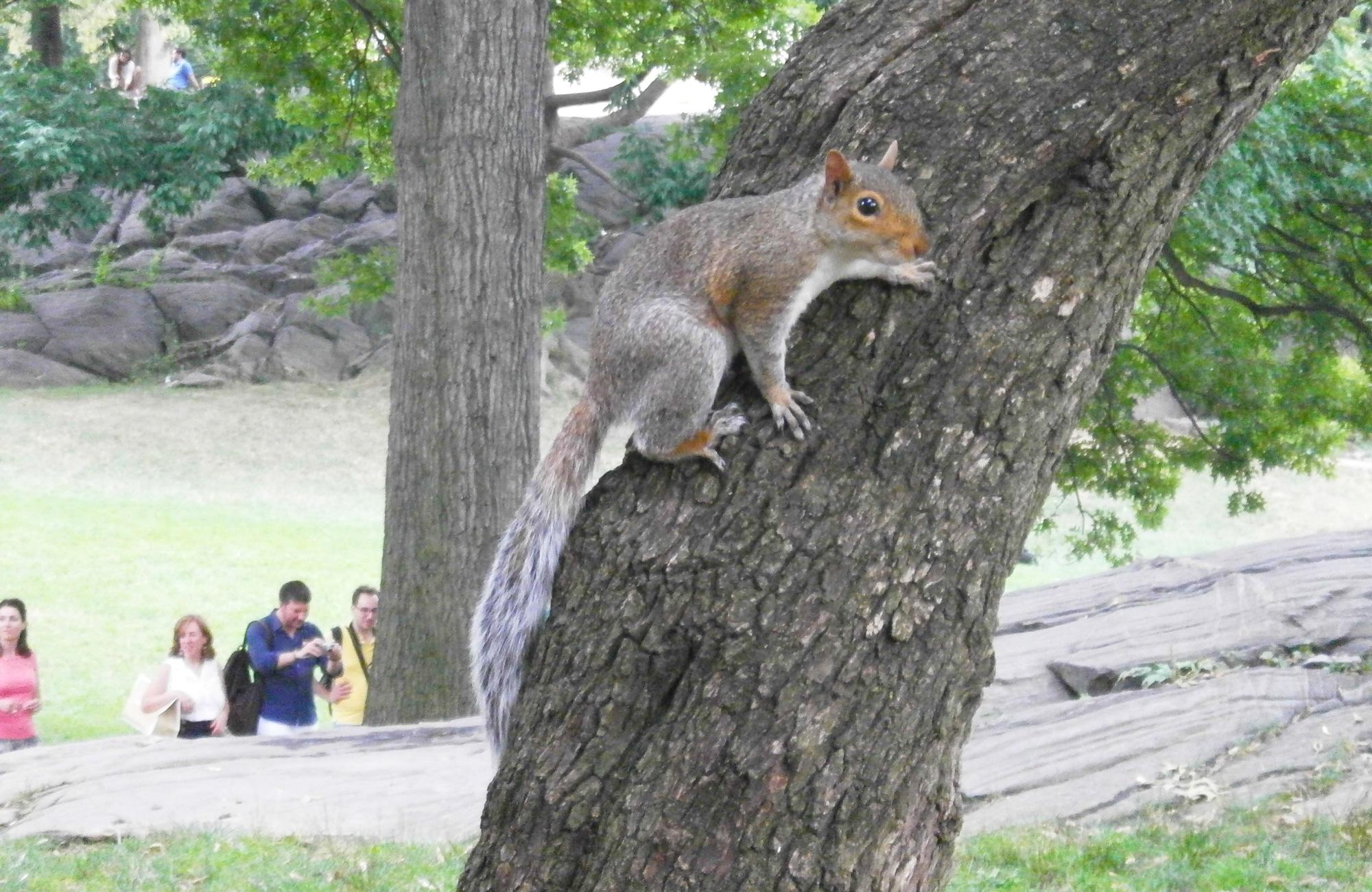 squirrel-Central-Park.jpg