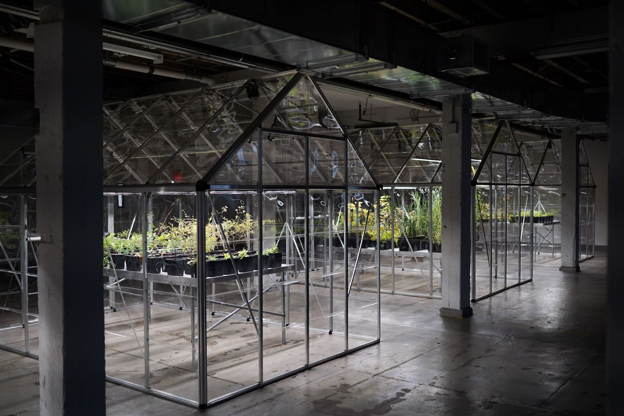 Extinct-in-NY-LMCC-Arts-Center--1.jpg