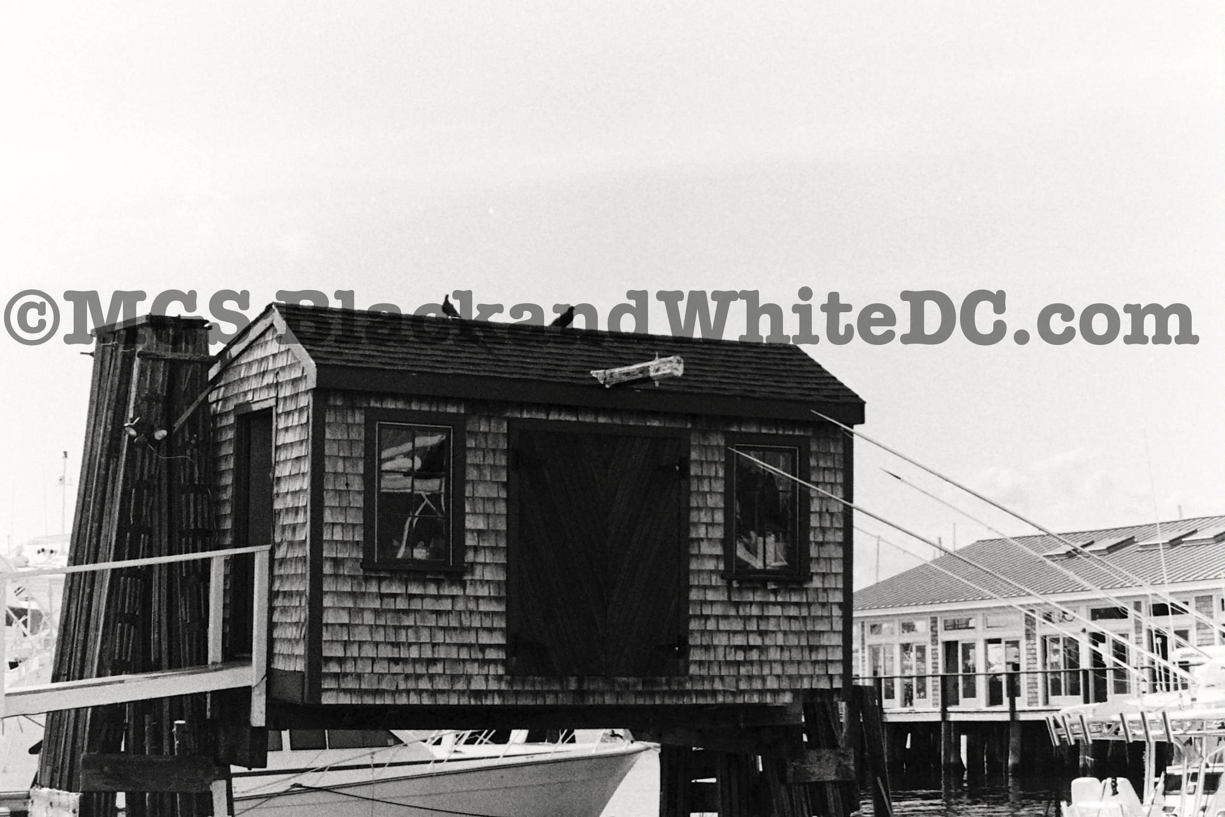 Newport67.jpg