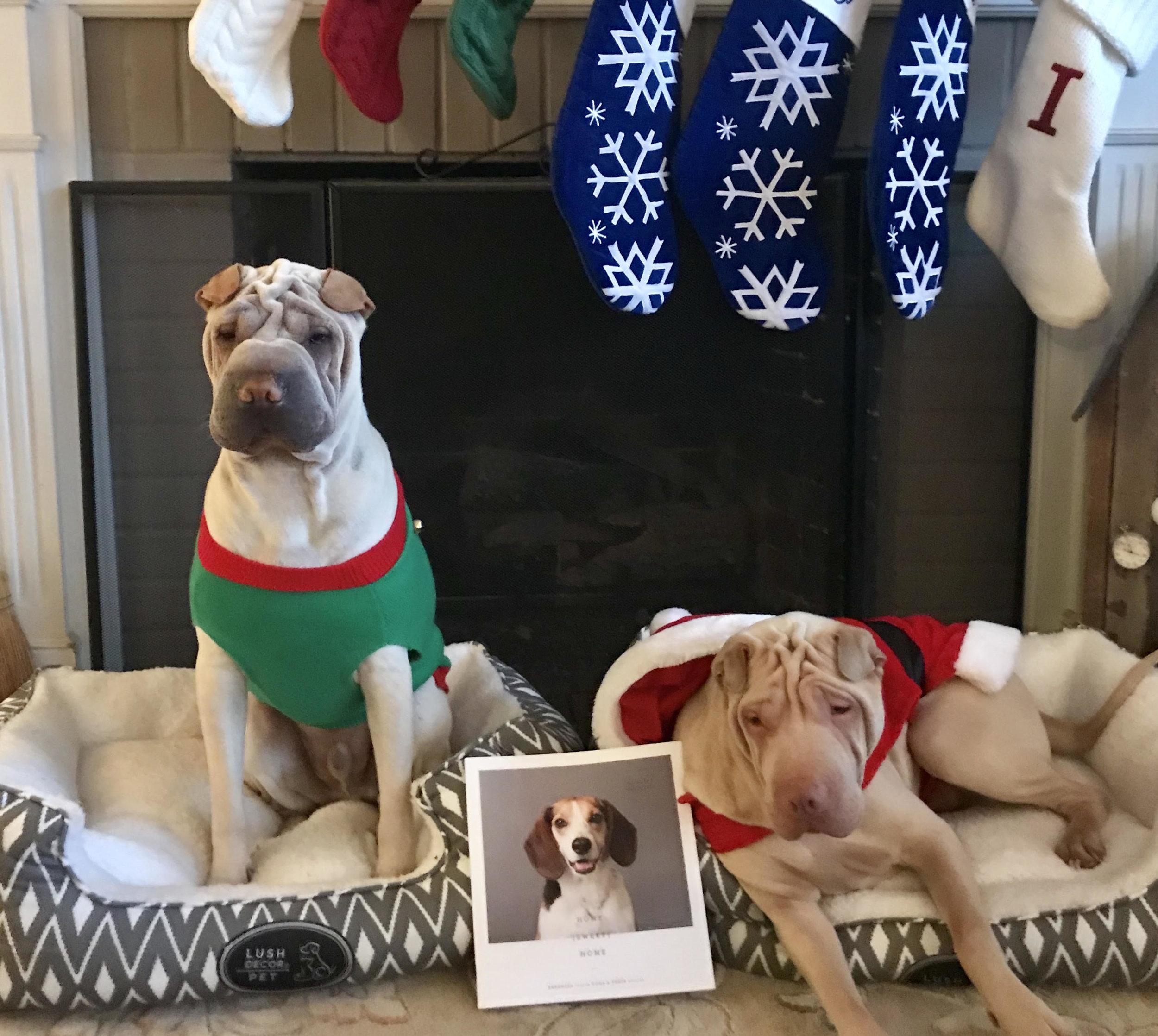 Knox and Louie Christmas 2017.jpg