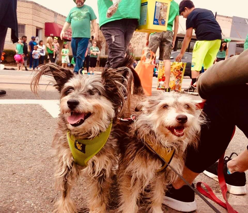 Philip and Karen Martin's pups enjoy the St. Pat's Parade. Dublin, left, has recently had a surgery to remove her eye due to glaucoma, but the Martin's fur kids are slowing for no one.