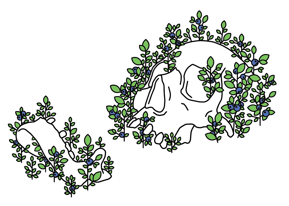 skull-01.png