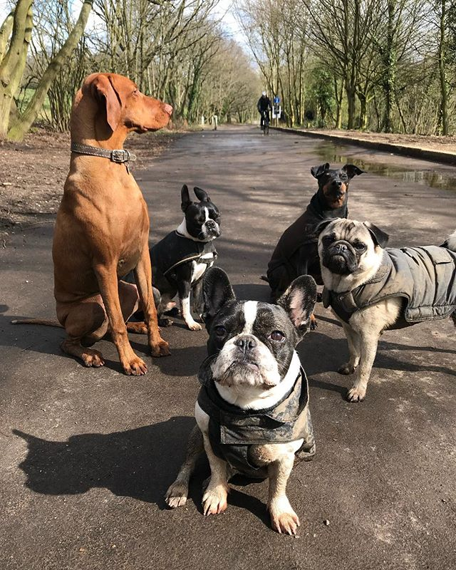 Sunshine and mud 💩 #packlife #FinsburyBarkChunks #FinsburyBarkBingo #FinsburyBarkHitchy #FinsburyBarkArchie2 #FinsburyBarkCurtis