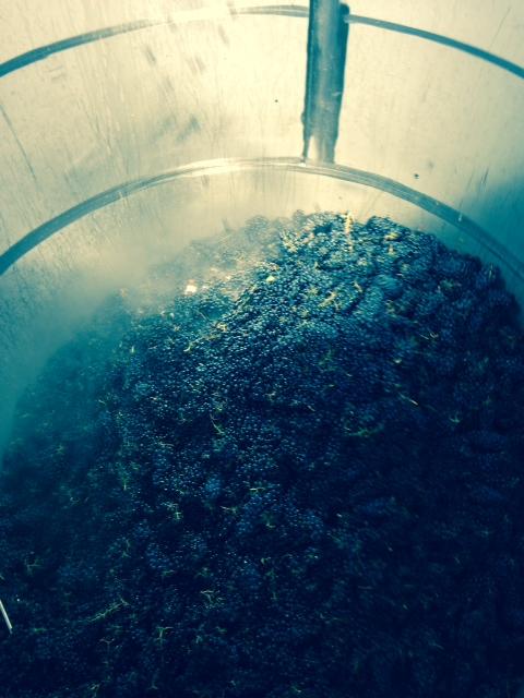 whole cluster fermentation.JPG