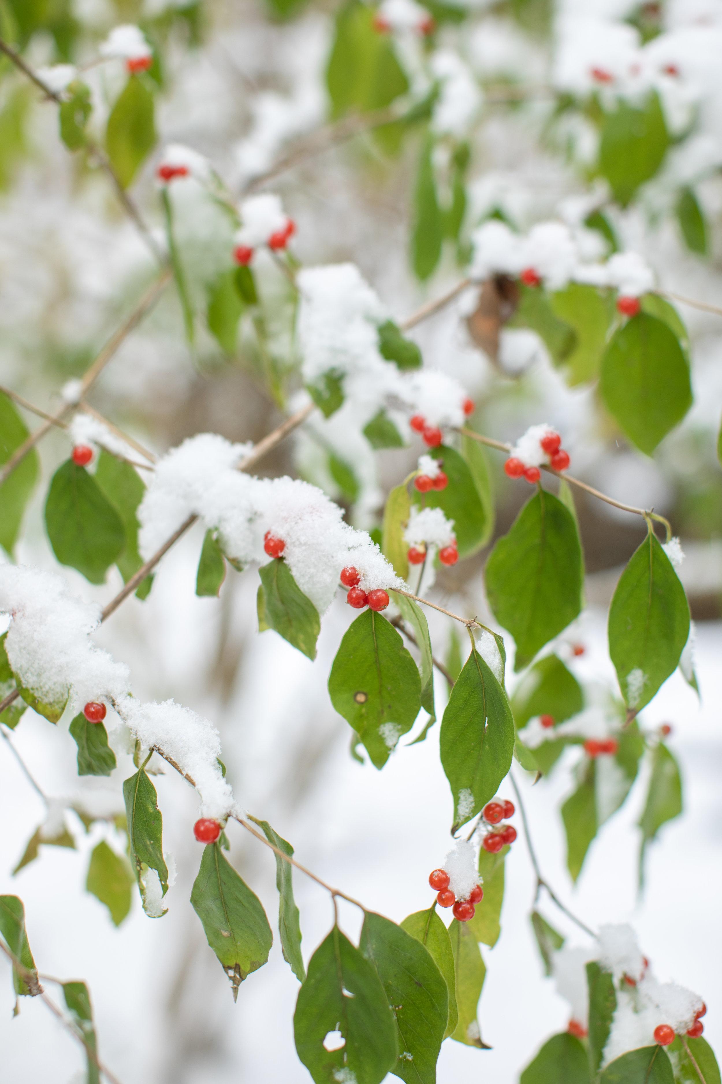 SnowDay-39.jpg