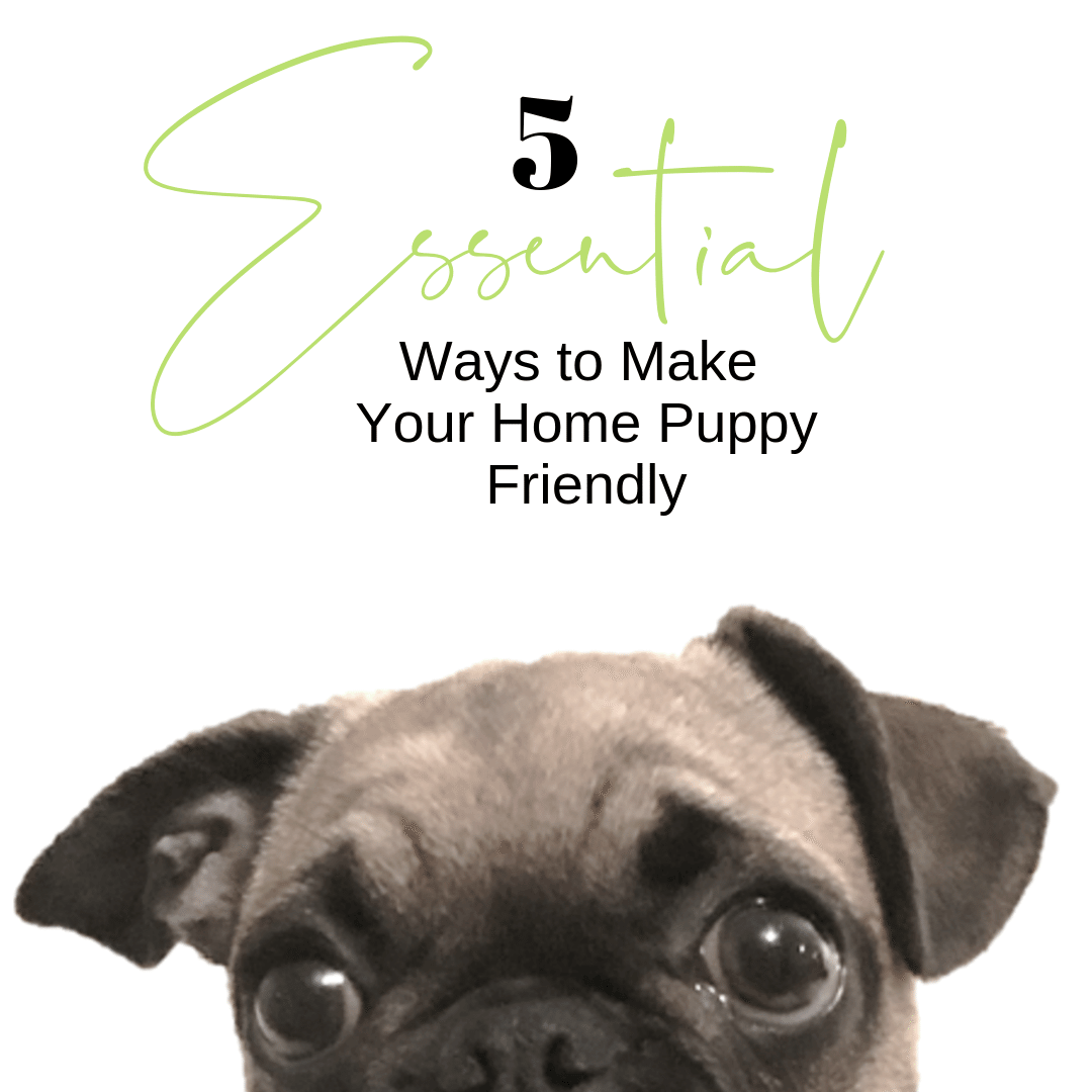 michael-helwig-interiors-5-essential-ways-to-make-your=home-puppy-friendly-blog-cover.png