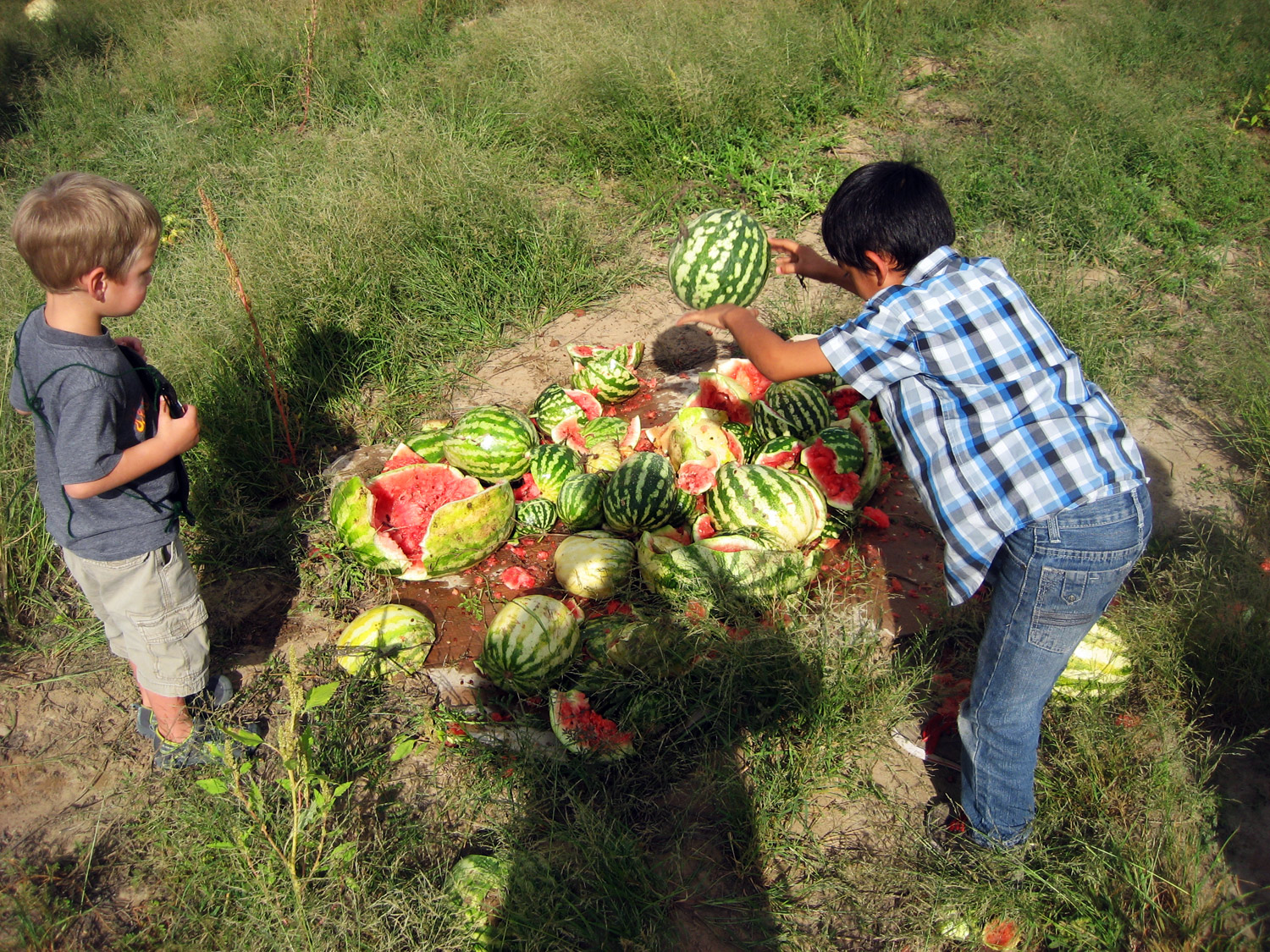 Smashing over-ripe watermelons left in the fields after harvest.