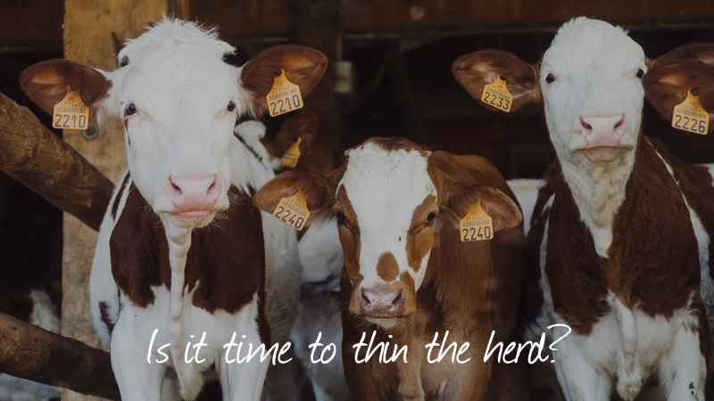 Thinning-Is It Time To Thin The Herd?