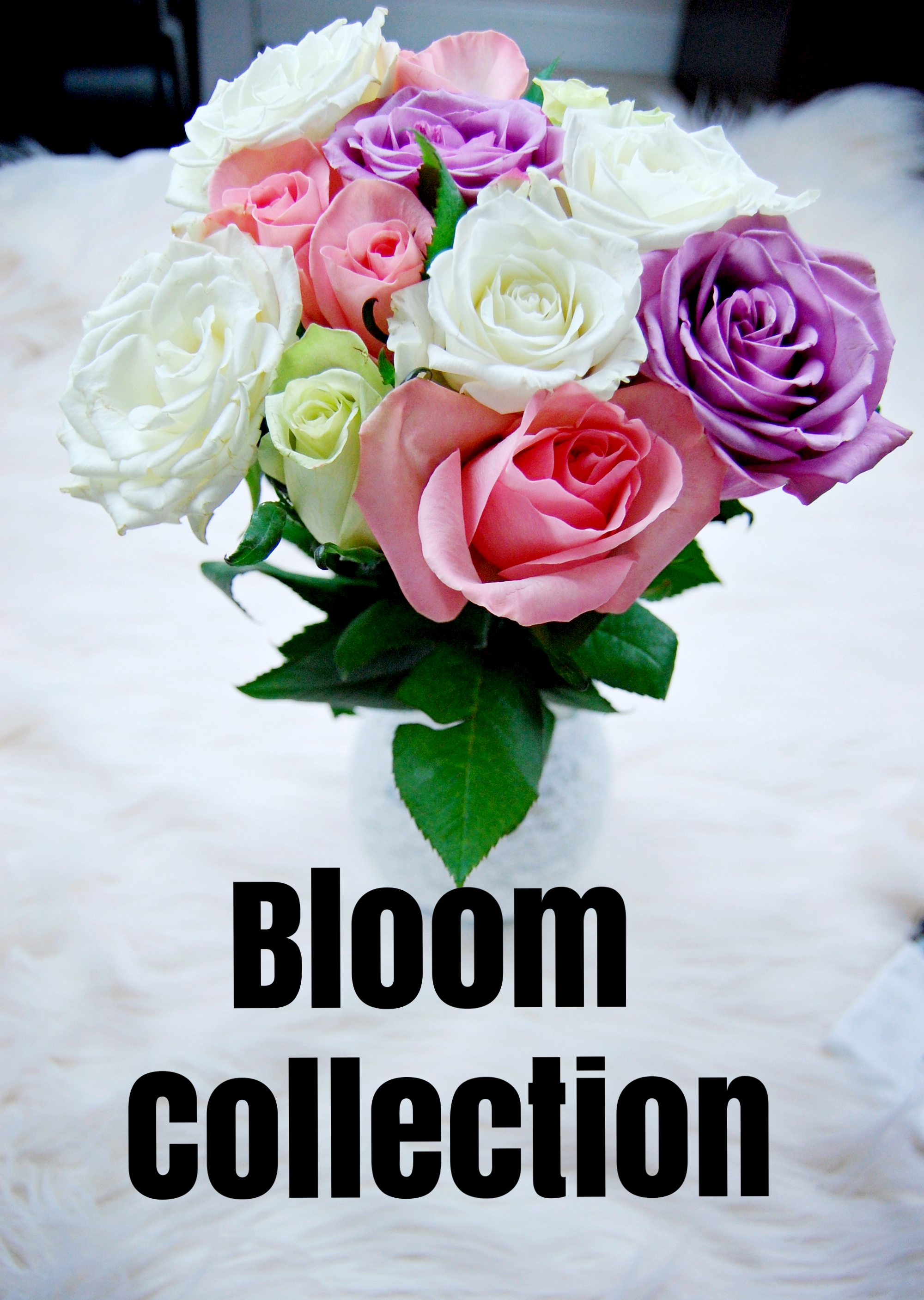 blooms back lit roses.jpg