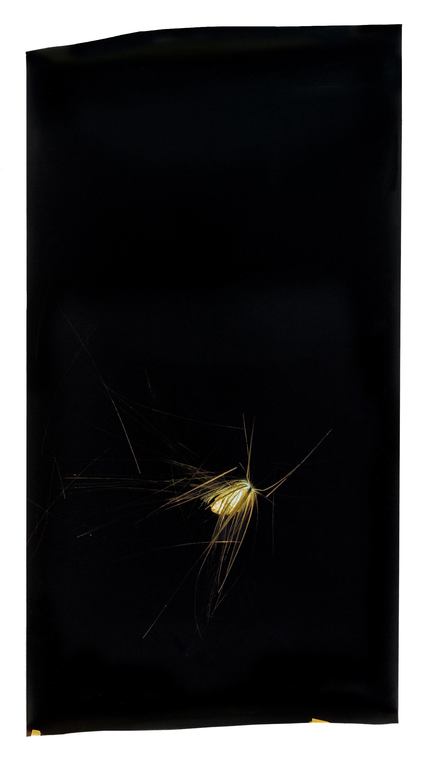 Household Specimen #1: Artichoke Seed