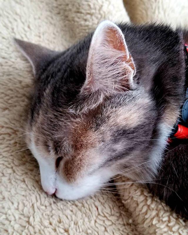 My sweet little angel Olive Lynn the Cat @olivelynnthecat . . #helpsomeouttodayrva #faith #soberissexy #soberwarrior4god #neverquitneversurrender #NeverGiveUp #mikelynnshotsTopShots #mikelynnshots #photography #Photo #nofilter #nightphotos #Nightshot #godsnotdead #godisgood #somethingscoming #jesus #blessedbygod #god #love #cat #pet #love #angel