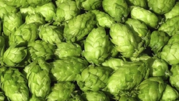 mj-618_348_20-things-you-didnt-know-about-hops+copy.jpg