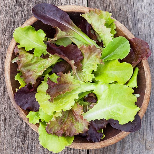 High Mowing Gourmet Lettuce Blend