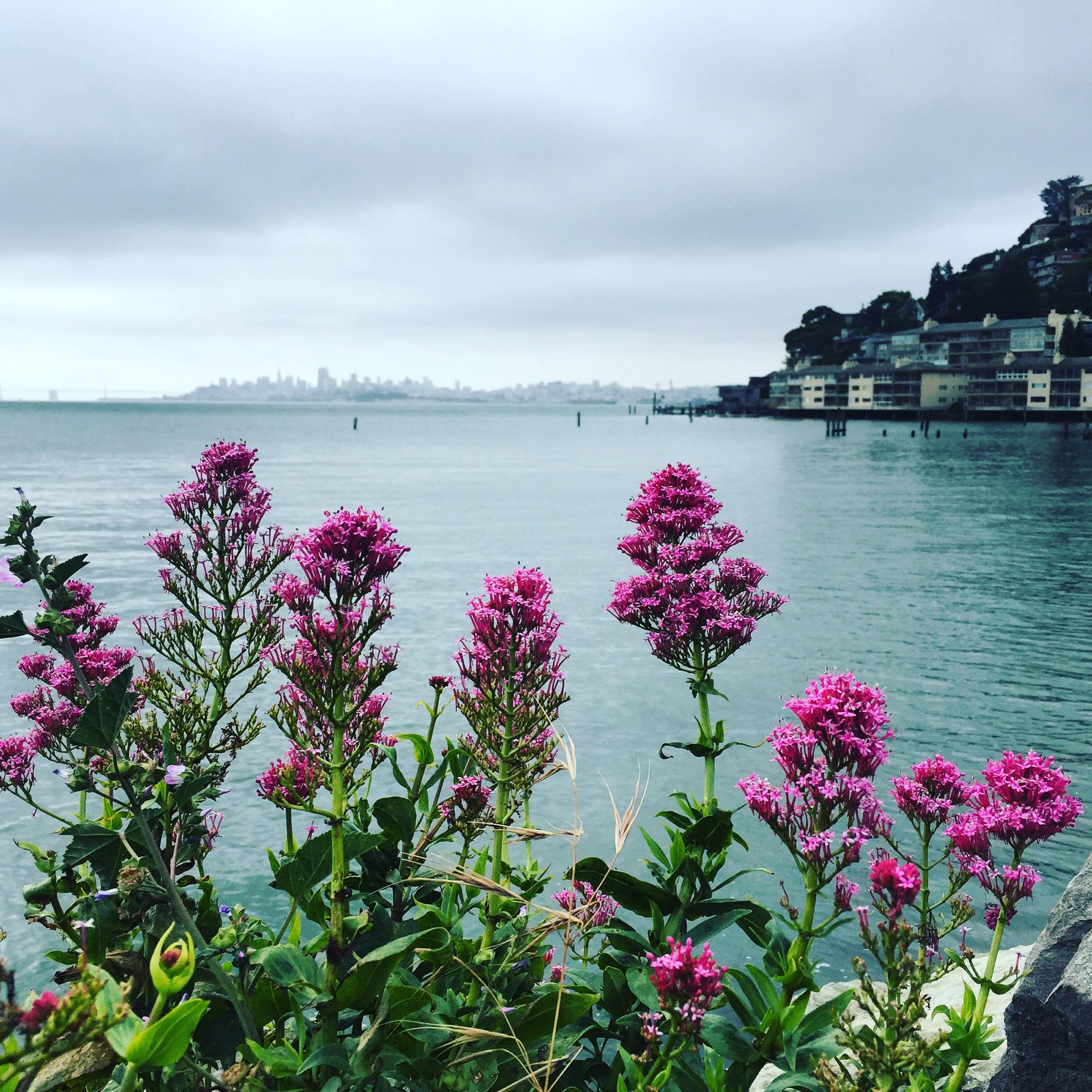 Taken in Sausalito, looking at San Francisco.