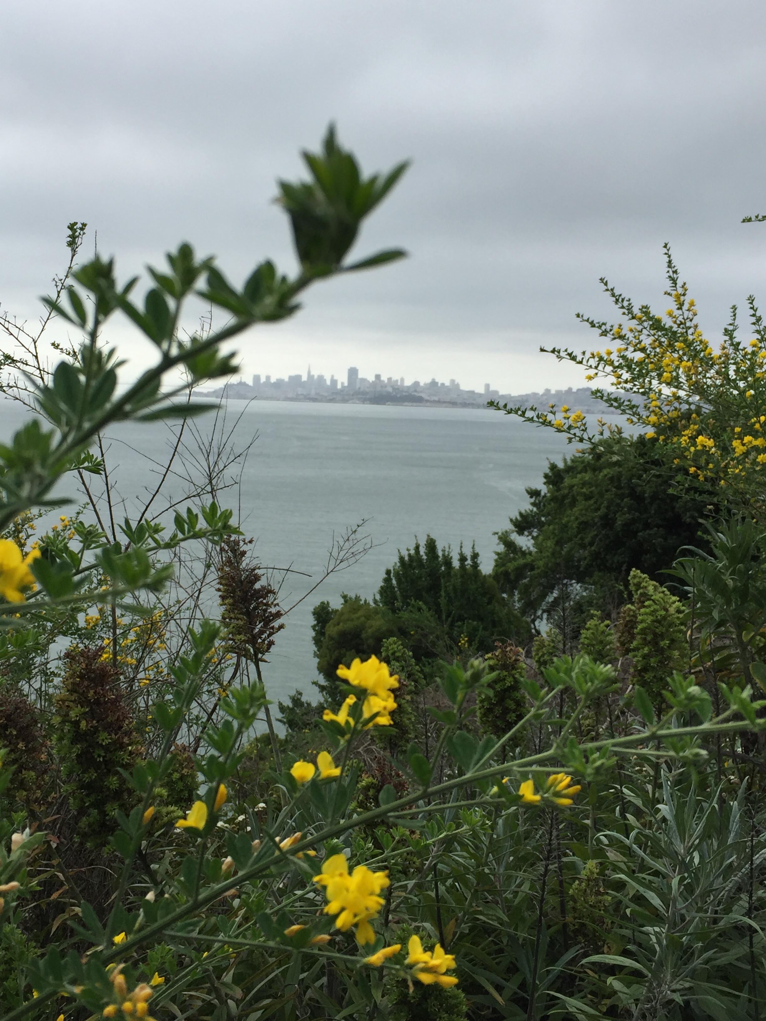 Hi San Fran!