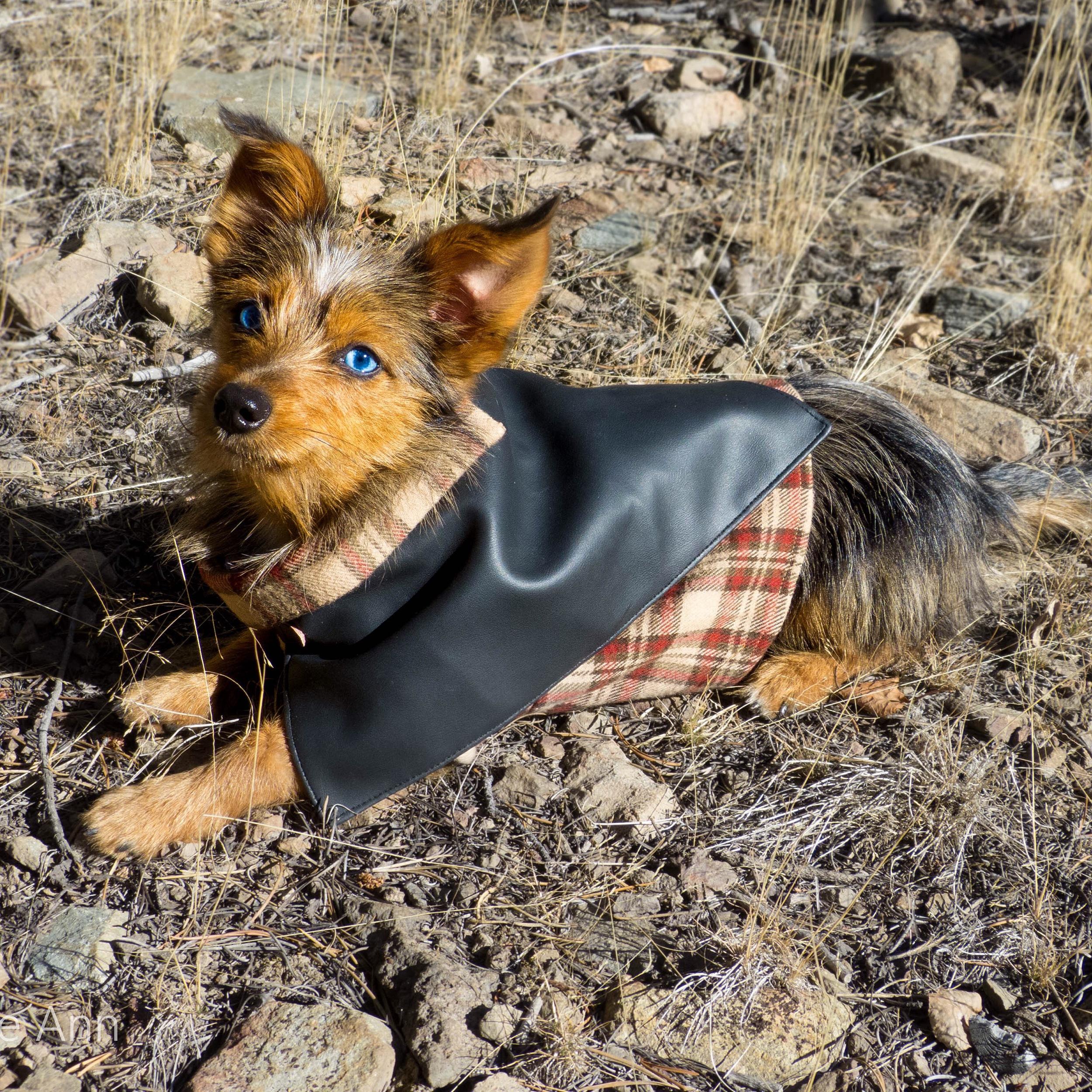 Dog Clothes Fashion Little Bear Dog Apparel38.jpg