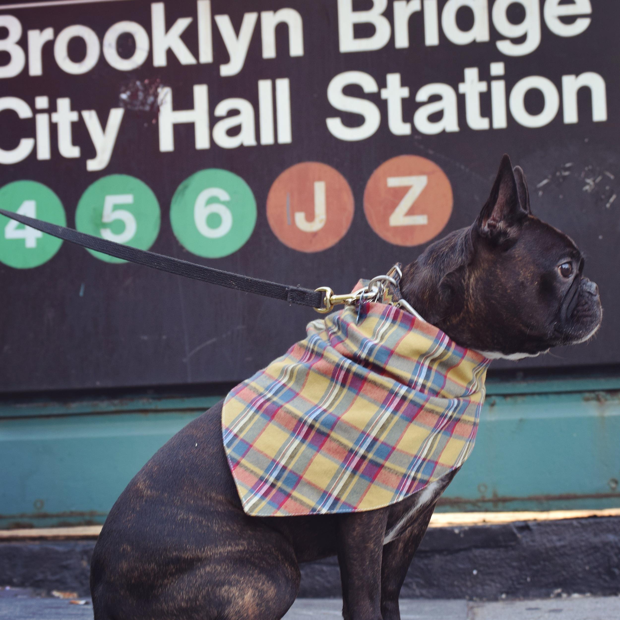 Dog Clothes Fashion Little Bear Dog Apparel25.jpg