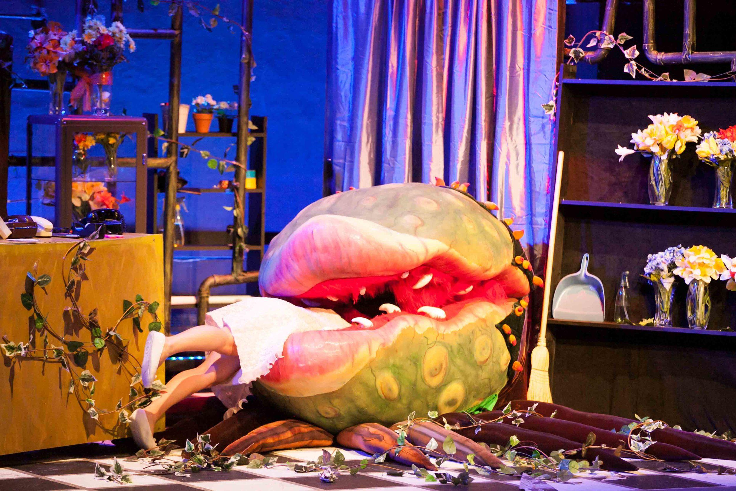 6-15-13 Little Shop Jaws 0189.jpg