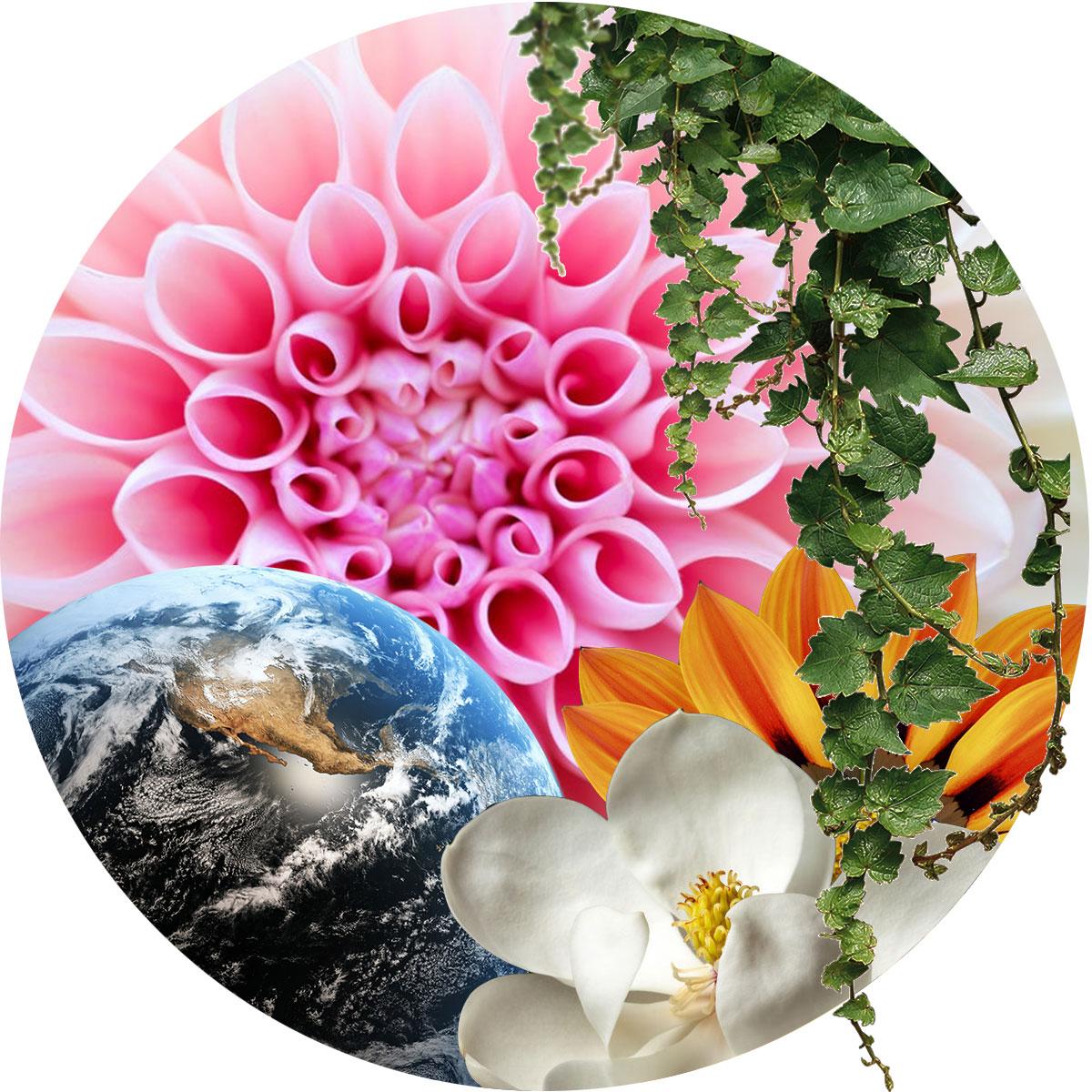 Flower-Essences.jpg