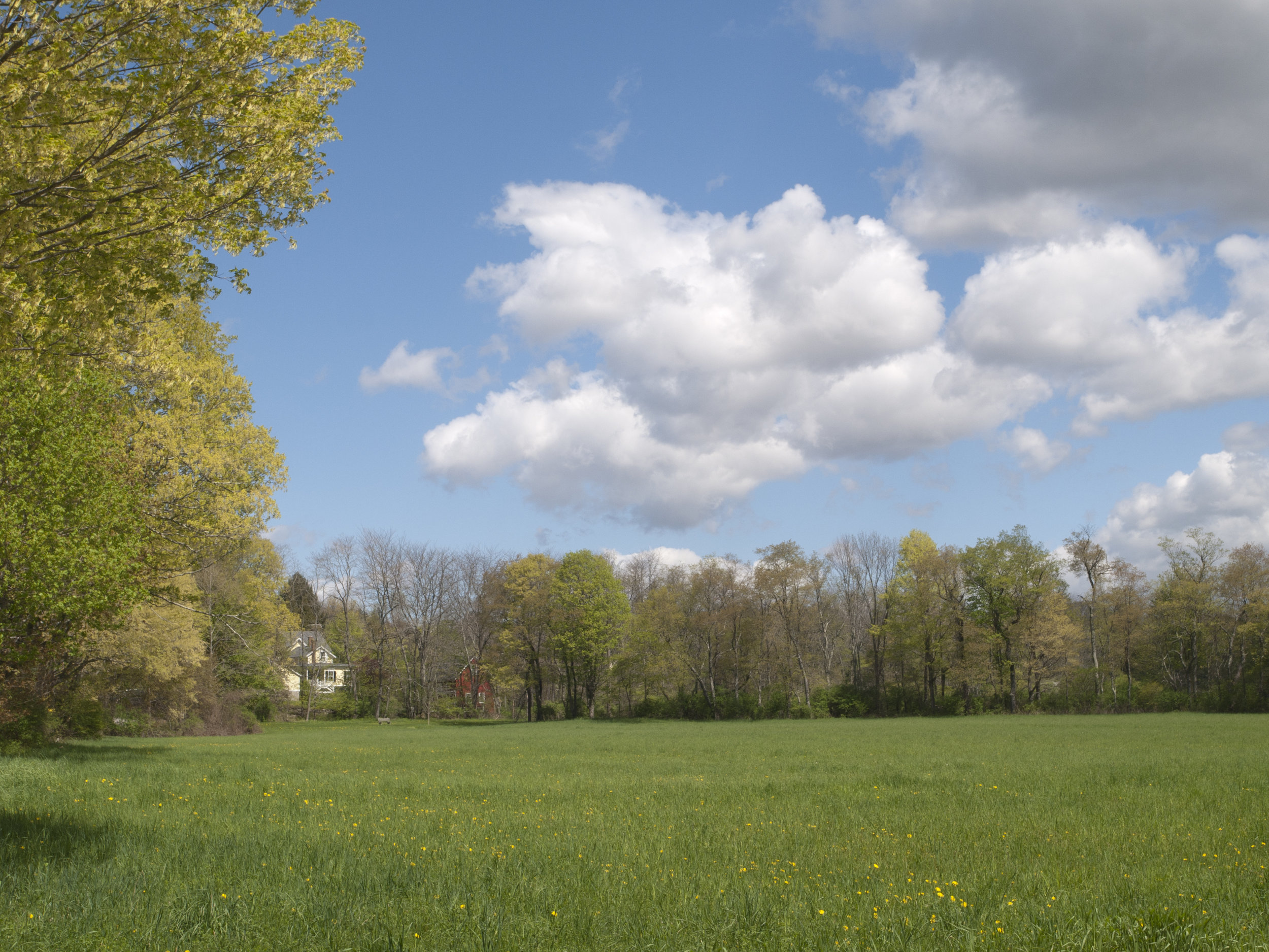Stiles Meadow, East or West? Separate from other 2 by Anne Day.jpg