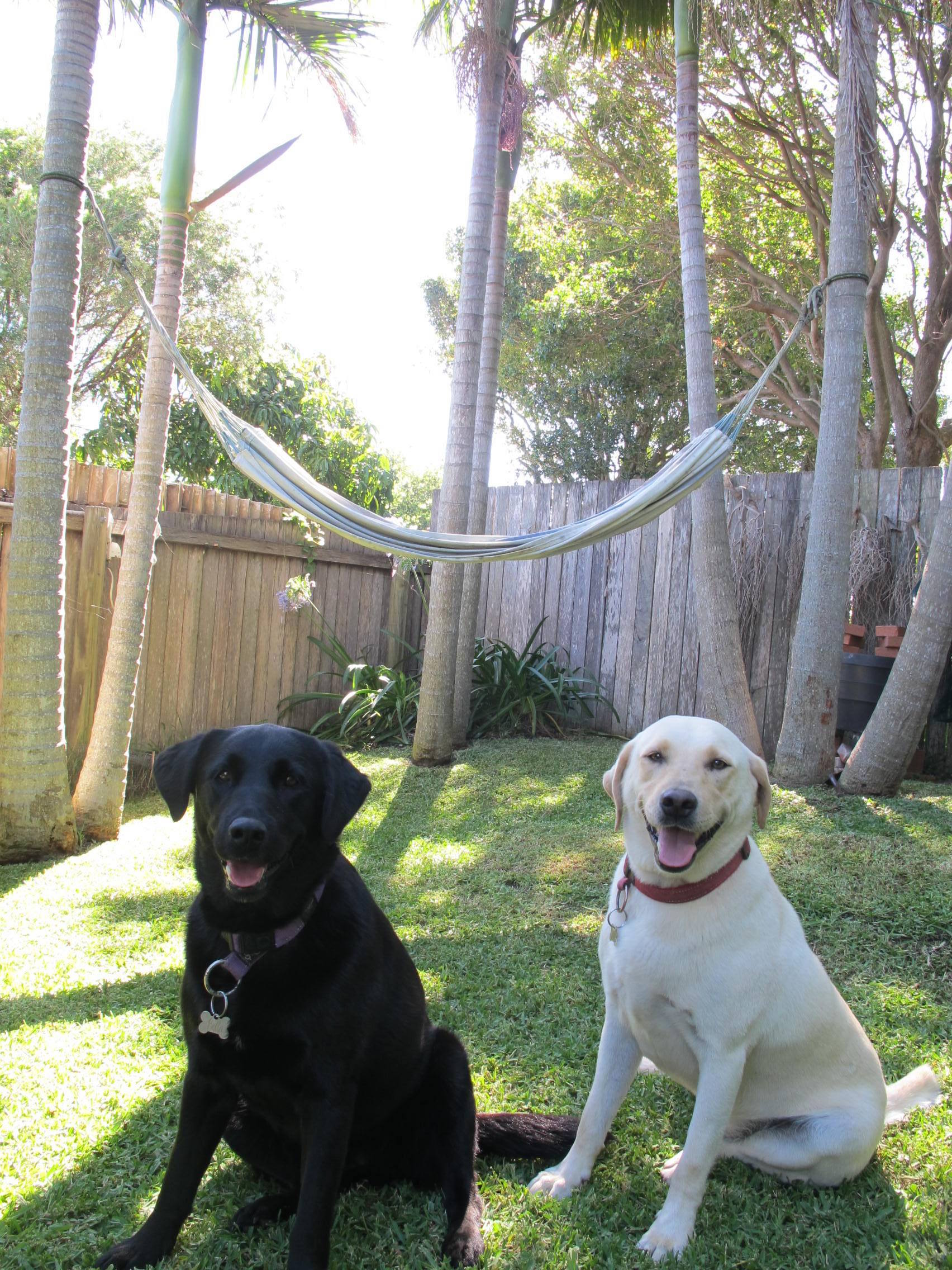 All About Pet Care_B&B with Palm Trees_Best_Net.jpg