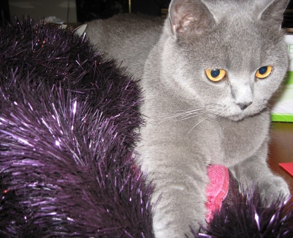 All About Pet Care_Betty Tinsel_Best Pic_Net.jpg