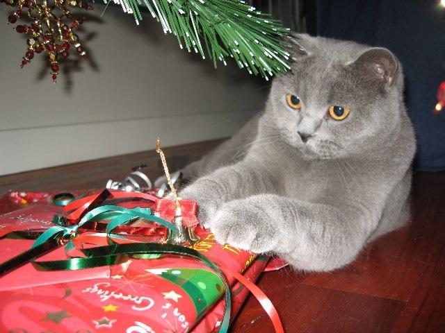 All About Pet Care_Betty Under Xmas Tree_Best_Net.jpg