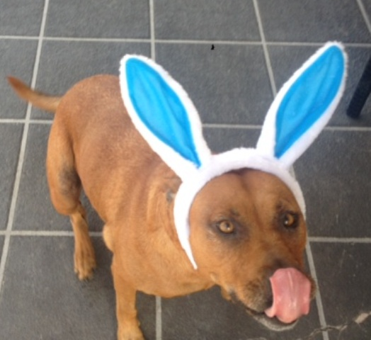 All About Pet Care_Easter Bunny Jessie Rainbow_Net_Best.JPG