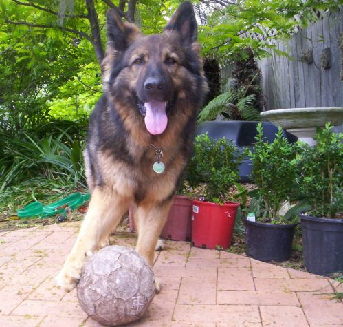 All About Pet Care_Saba Soccer Ball Pic_Best.jpg