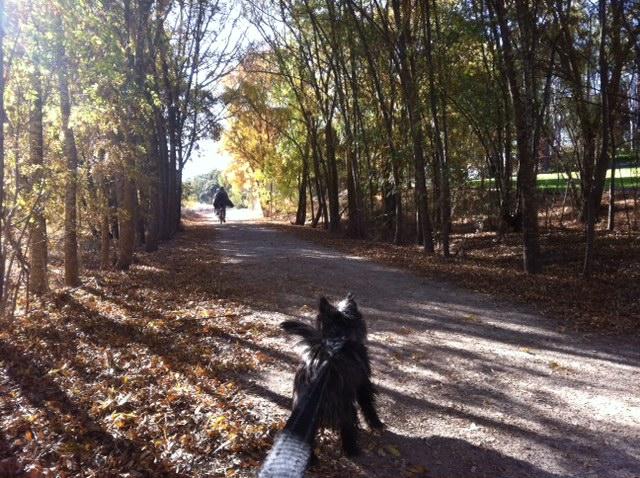 Maisie on Reisling Trail Clare SA.JPG
