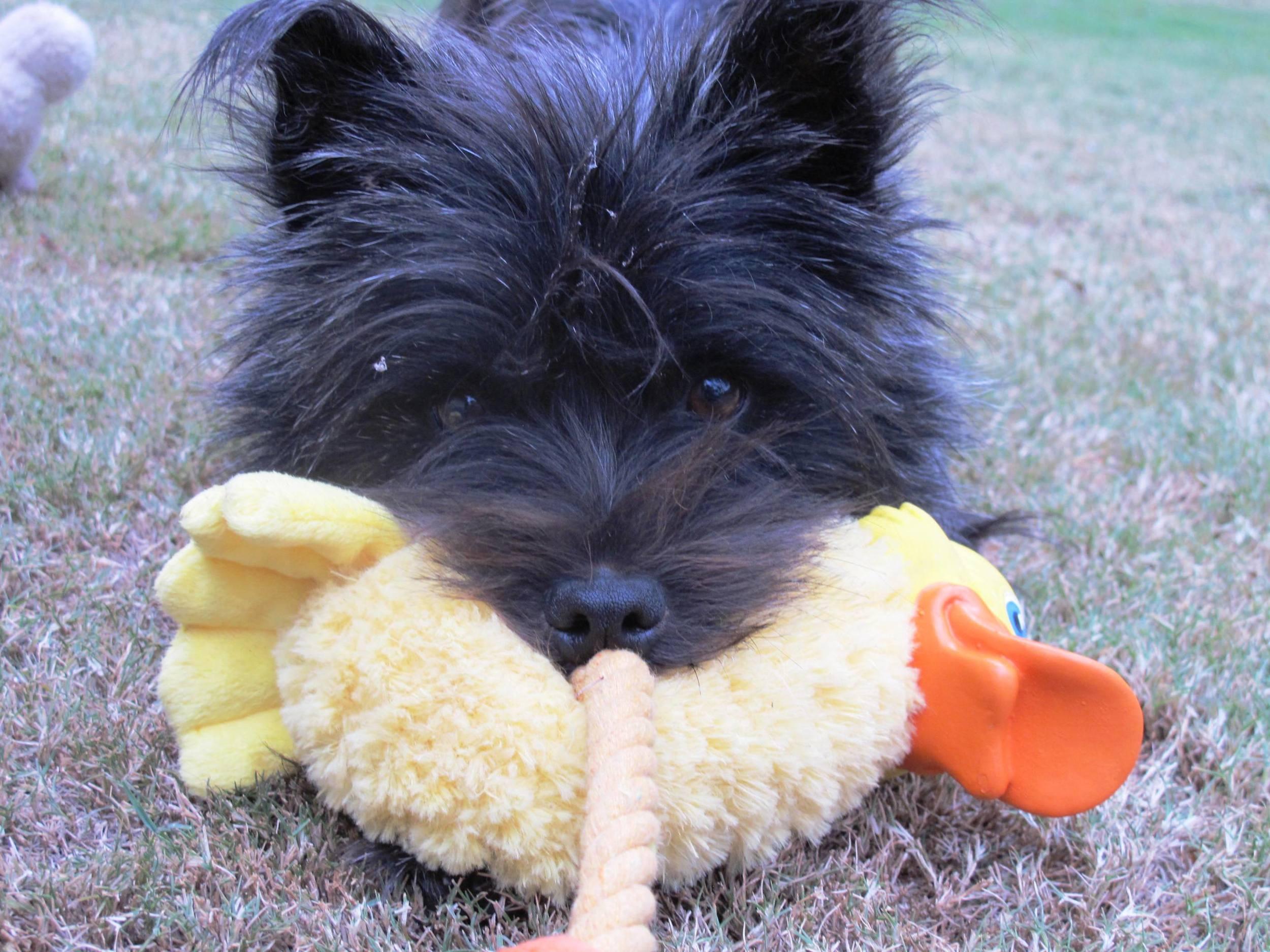 Maissie & ducky_Net.JPG