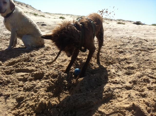 Bindi & Rocky Beach Dig.JPG