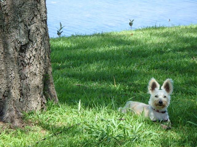 All About Pet Care_Cody_Best_net.JPG