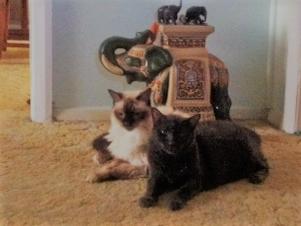 Freddie & Myrtle Elephant 2.png