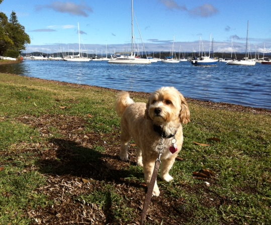 Bear and I on a sunny day walking & sniffing around Valentine foreshore!