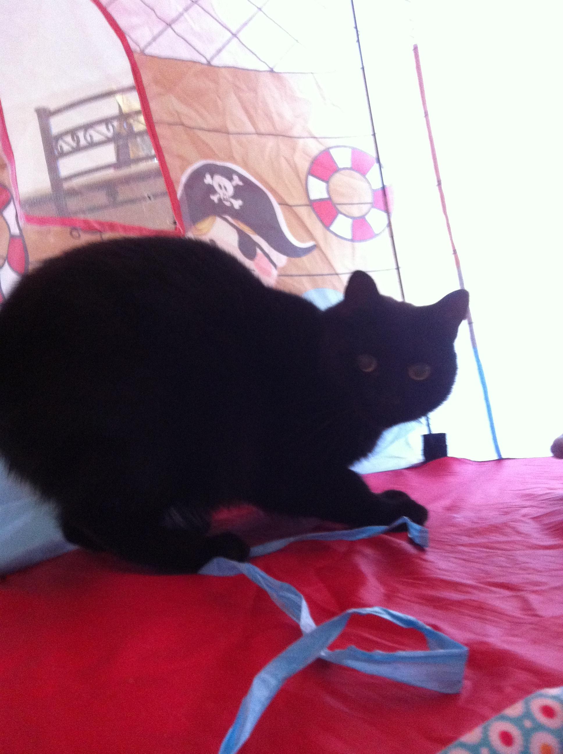 Meet Huntley ... Vader's brother! He loves to play hide n seek in his pirate tent.