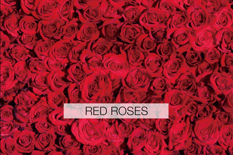 redroses.jpg