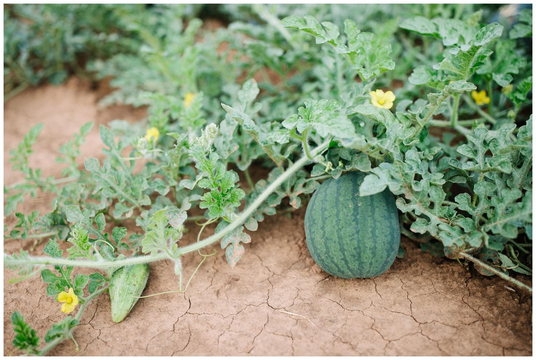 Reimer Farms__Lubbock Texas produce garden_03.jpg