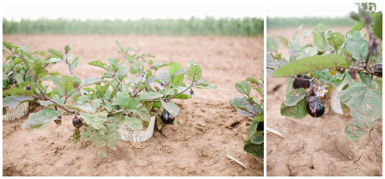 Reimer Farms__Lubbock Texas produce garden_08.jpg