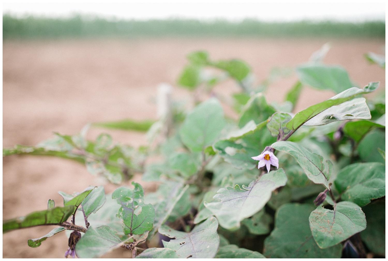 Reimer Farms__Lubbock Texas produce garden_13.jpg