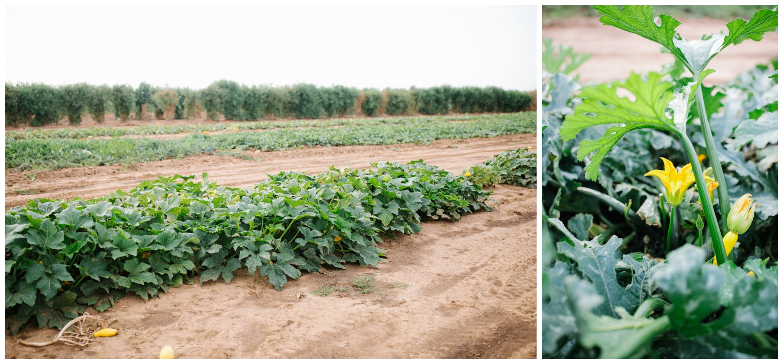 Reimer Farms__Lubbock Texas produce garden_16.jpg